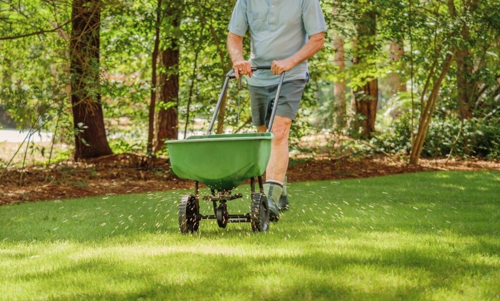 spring lawn fertilization