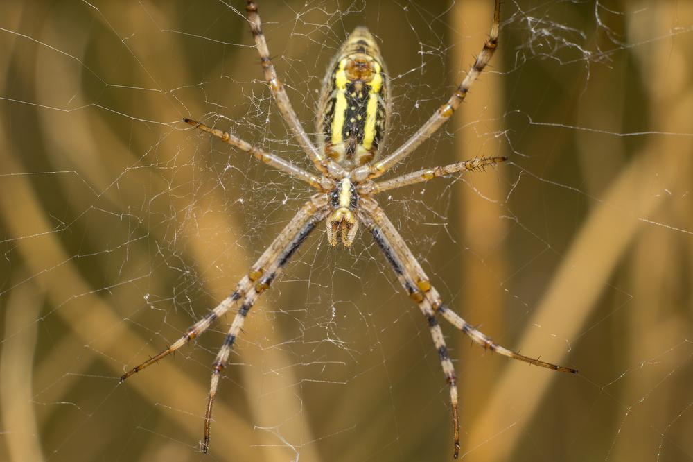 benefits proactive spider control