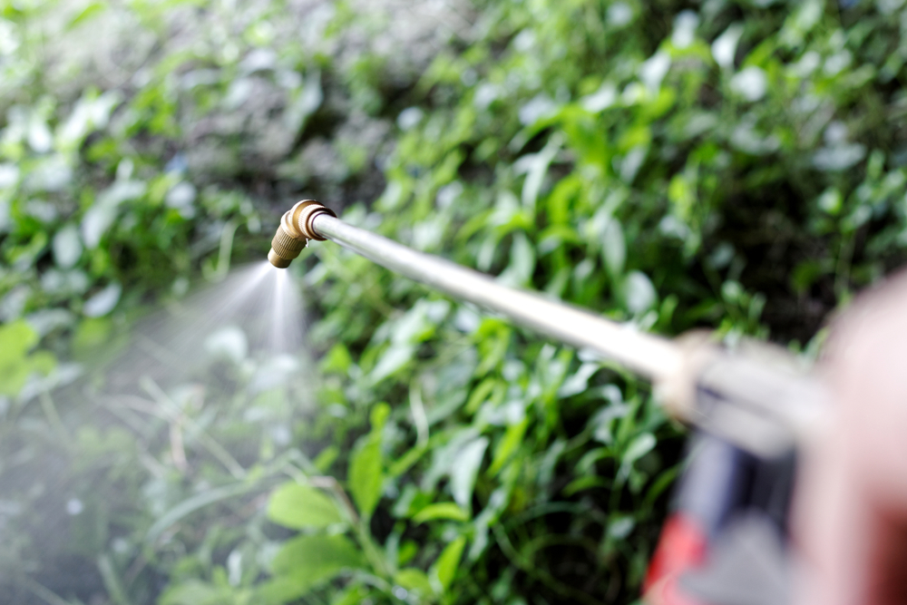 fall weed spraying important
